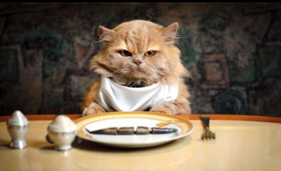 Jangan Berkira Untuk Beli Makanan Kucing Rezekinya Memang Menakjubkan Satkoba Press